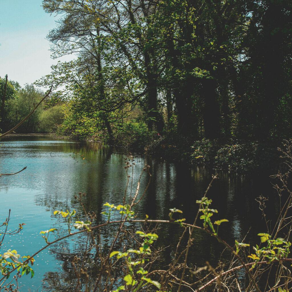 Stonebridge Beck area pond
